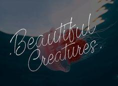 Beautiful Creatures Font