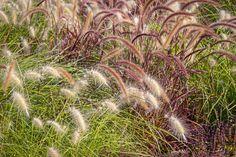 Pick the Right Ornamental Grass