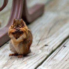 Confused Chipmunk