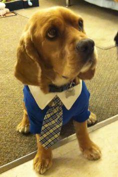 Polo Dog Shirt - Nautical Blue Customer Photo (twinkies with dad!)