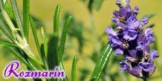 Napadlo vás niekedy, že táto voňavá bylinka môže mať oveľa viac využitia, než len ako korenina do vašich jedál?  Vedci potvrdili, že vôňa rozmarínu dokáže pozitívne ovplivniť pamäť a udržať pozornosť. Testy, ktoré skúmali ako vonné silice rozmarínu zlepšujú ako dlhodobú, tak aj krátkodobú pamäť, preukázali zlepšenie o 60% až 75%, čo by sa mohlo skvele hodiť nielen študentom. Prečítajte si viac: http://www.rajvoni.sk/clanok/16-rozmarin-pre-lepsiu-pamat