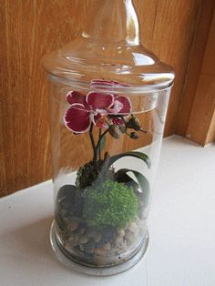 Mini Phalaenopsis Orchids Terrarium -  Miniatures Phalaenopsis orchids will do well in small terrariums, and small ivy, fibrous-rooted begonia and small ferns can be grown with the Phalaenopsis orchids since they all enjoy the humidity that exists within a terrarium.