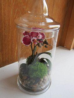 orchid flora pinterest orchideen terrarium und gl ser. Black Bedroom Furniture Sets. Home Design Ideas