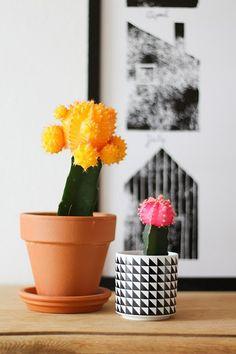 Cactus | Elske | www.elskeleenstra.nl