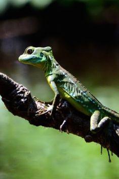 92 Best Costa Rica Wildlife images in 2019   Costa Rica, Animals