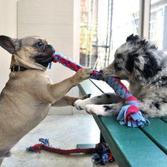 Cães precisam de exercício, independentemente do tempo. Eles precisam de estímulos mentais e físicos.  Veja brincadeiras para distrair seu cão em casa.