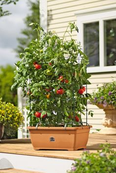 Growing Gardening: How To Make A Self Watering Container