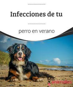 Infecciones de tu perro en verano. Con la llegada del verano, debemos intensificar los cuidados de nuestras mascotas. ¿Cómo puedes prevenir las infecciones de tu perro en verano? #infecciones #verano #intensificar #mascotas #prevenir