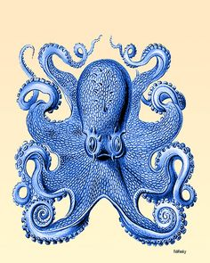 Lovely vintage octopus. Second print showing other side of octopus is available in the Nautical Nell shop. Also available as a set of three prints