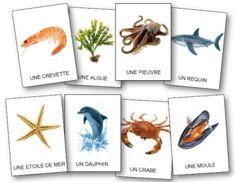 Vocabulaire sur les animaux de la mer