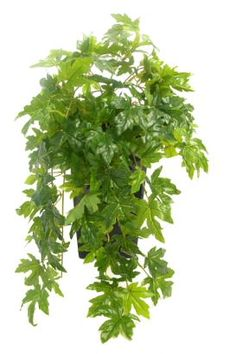 Artificial Maple Ivy And Artificial Trailing Plants From Evergreen Dir Artificial Green Wall, Artificial Plants, Ash Leaf, Leaf Structure, Tree Map, Ivy Plants, Different Shades Of Green, Indoor Garden, Trellis
