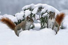 Having fun in the snow by ikord via http://ift.tt/2fxBEgh