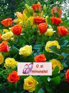 Most Beautiful Flowers, My Flower, Pretty Flowers, Beautiful Gardens, Simply Beautiful, Yellow Roses, Red Roses, Rosa Rose, Deco Floral