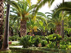 Sofitel Rabat Jardin des Roses ***** - Jardin