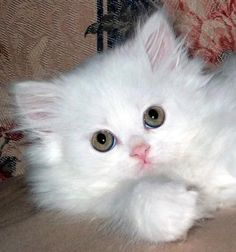 Soft Kitty on We Heart It.