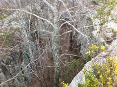 """Between a rock and a hard place"" near Seven Room Rock, Gadsden, AL"