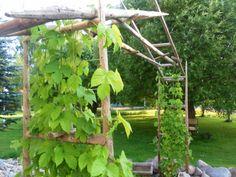 köymös Arch, Outdoor Structures, Garden, Garten, Arches, Lawn And Garden, Outdoor, Bow, Tuin