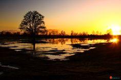 Zonsondergang bij de boom
