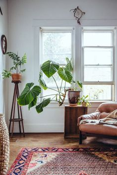 Plants ❤️ the natural light pouring in from these double-hung windows. A perfect cosy corner for daytime dreaming.
