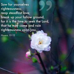 Hosea 12:12