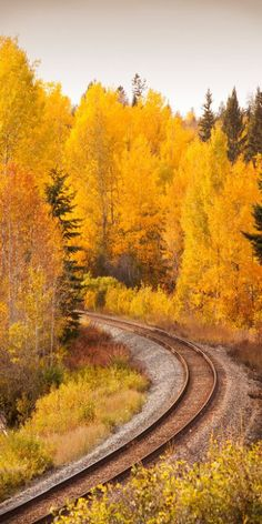 Outono dourado emoldura a ferrovia.