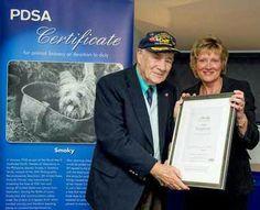 smoky war dog | Bill Wynne accepting PDSA bravery award for Smoky Bravery Awards, Dogs With Jobs, Famous Dogs, War Dogs, Service Dogs, Yorkie, Baseball Cards, History, Friends