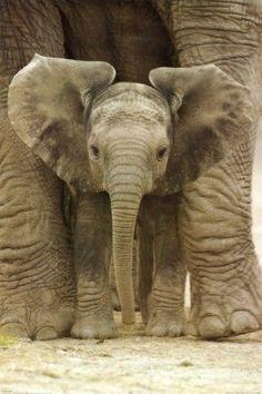 Baby & Momma Elephant