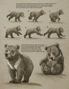 Art tutorials for all — anatoref: Bear by Aaron Blaise Animation Reference, Drawing Reference, Animal Sketches, Animal Drawings, Urso Bear, Bear Sketch, Dog Expressions, Bear Drawing, Poses References