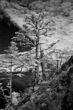 Eagles Nest on the Sunshine Coast, British Columbia Sunshine Coast, British Columbia, Eagles, Nest, Photography, Fotografie, Eagle, Photography Business, Photo Shoot