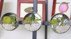 How to Make Magnetic Terrariums - DIY Garten Mini Terrarium, Air Plant Terrarium, Tiny Garden Ideas, Small Backyard Gardens, Big Garden, Large Backyard, Garden Club, Spring Garden, Air Plants