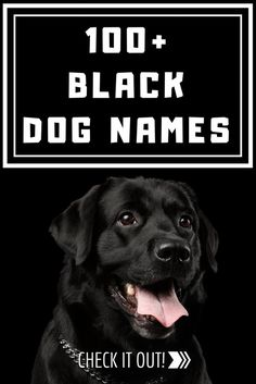 Looking for good names for black puppies? We've gathered together all the best cute, funny and unique male and female black dog names. Black Dog Names, Small Dog Names, Dog Names Male, Dog Names Unique, Boy Dog Names, Black Puppy, Black And White Dog, Female Names, Black Lab Puppies