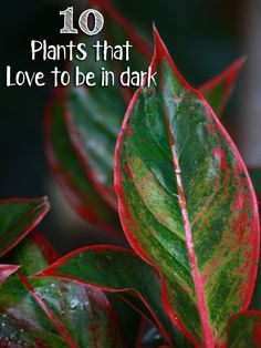 10 Plants that Love to be in Dark