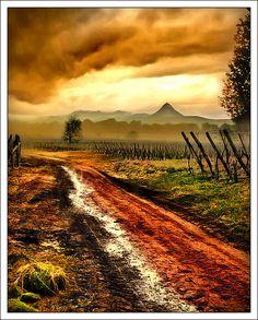 Vineyard, Alsace, France.  Photo: Jean-Michel Priaux, via Flickr
