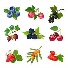 Buy Berries of Trees and Shrubs Set by macrovector on GraphicRiver. Berries of trees and shrubs set with green leaves isolated vector illustration. Illustration Art Drawing, Botanical Illustration, Watercolor Flowers, Watercolor Art, Fruit Clipart, Fruit Icons, Doodle Icon, Exotic Art, Wood Burning Patterns