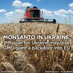 Breaking: In 2013 Monsanto invested $140 million in new seed plans in Ukraine. As the breadbasket of Europe, the Ukraine is a key target for Monsanto, which sees huge potential for production and a huge new market. Europe has been quite resistant in allowing GMOs, but if they are successful in Ukraine then there might be a domino effect in Europe. Will Ukraine become the new hotbed for Monsanto's GMOs? Read more: http://bit.ly/1qtGxpq #GMOs #stopmonsanto #EU #US #Monsanto