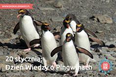 pingwin8
