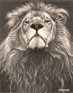 "'Head of the Family' - Lion - Fine Art Pencil Drawings by kjhayler ~""A very superior lion looking down his nose. He struck this pose when he heard the roar of another lion in the background. Animal Drawings, Pencil Drawings, Pencil Art, Lion Design, Lion Tattoo Design, Desenho Tattoo, Lion Of Judah, Lion Art, Rip Tattoo"