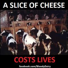 Learn the truth about dairy.
