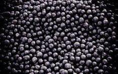 acai berry - Google Search