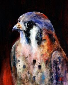 KESTREL Watercolor Bird Print by Dean Crouser