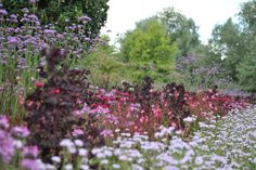 Late summer border with verbena