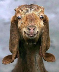 I'd name him Jar Jar Binks. ;-) ~ETS