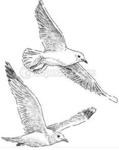 Watercolor Projects, Watercolor Bird, Bird Drawings, Animal Drawings, Seagull Tattoo, Bird Silhouette, Animal Sketches, Sea Birds, Beach Art