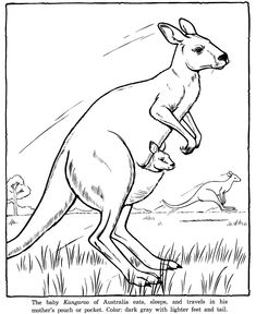 Kangaroo picture coloring sheets to color - These free printable zoo animal coloring sheets of zoo animals pictures are fun for kids. Coloring Pages To Print, Colouring Pages, Coloring Pages For Kids, Coloring Sheets, Coloring Books, Zoo Animal Coloring Pages, Animal Sketches, Animal Drawings, Art Sketches
