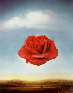 #DALI rose