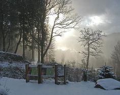 Winter Scene Coed Y Brenin Wales