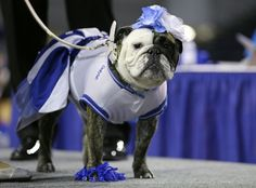 Deliylah stands after winning the best dressed dog award at the 35th annual Drake Relays Beautiful Bulldog Contest