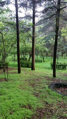 Bosque de Tlalpan en Tlalpan, Federal District