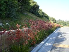 SQLA Inc. // West Hills Planting Commercial Landscape Design, West Hills, Planting, Sidewalk, Country Roads, Plants, Side Walkway, Walkway, Walkways