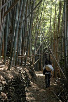 Pilgrimage to the 88 Sacred Places of Shikoku Island -- my biggest Japan dream
